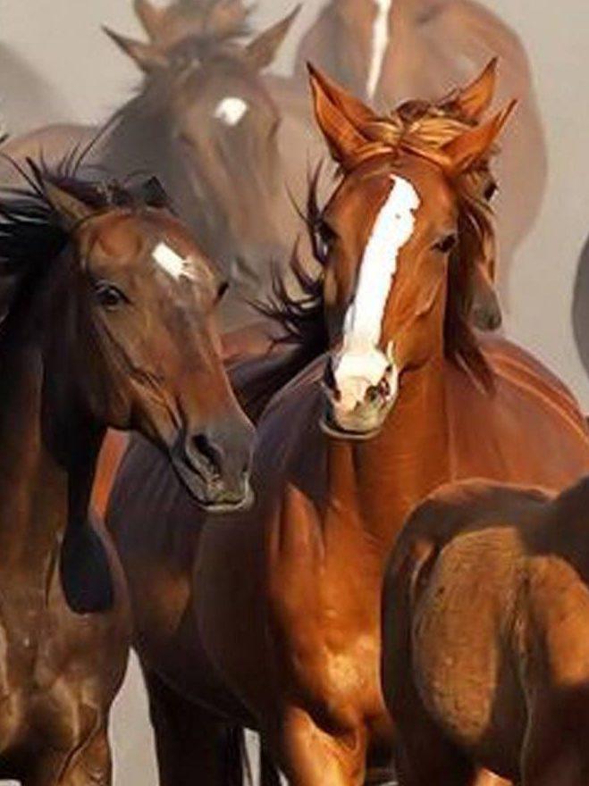 Horse Sense and Healing Workshop for Veterans