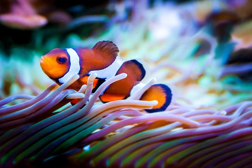 Chasing Coral : A community on the front-line of change